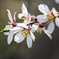 Весна спешит :: Ольга Акимова