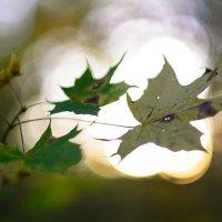 Осень :: Вячеслав Побединский