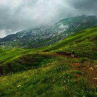 туманный пейзаж :: Elena Wymann