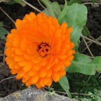 Оранжевое макро :: Natalia Harries