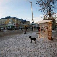 Мартовское утро в шахтёрском городке... :: Владимир Лищук (Vladimir Li)