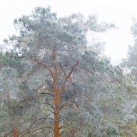 А снег идет... :: Raduzka (Надежда Веркина)