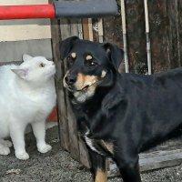 Один с тобою на двоих у нас секрет... :: Александр Резуненко