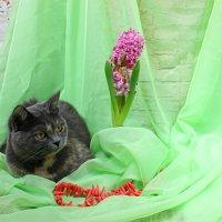 Кошка весенняя :: Наталья Стальмакова