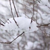 Мартовский снежок ) :: Валентин Родоманов