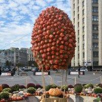 Фестиваль Золотая осень. Полет Гудвина на воздушном шаре... :: Наташа *****