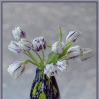 Тюльпаны :: Светлана Карнаух