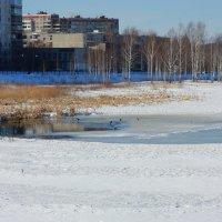 А в городе снова весна... :: Нэля Лысенко