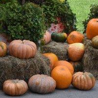 Фестиваль Золотая осень... :: Наташа *****