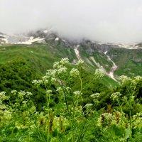 Альпийские луга :: Вячеслав Случившийся