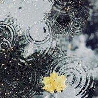 Осенний дождь :: Светлана Карнаух