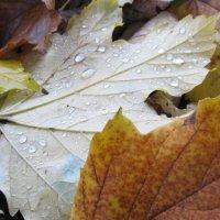 Осень :: Яна Михайловна
