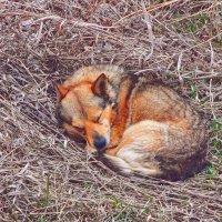 Не будите спящую собаку! :: Елена (Elena Fly) Хайдукова