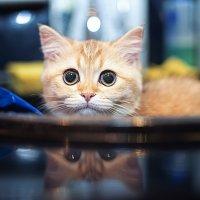 Не люблю мыться, но есть любопытство.. :: Лилия .
