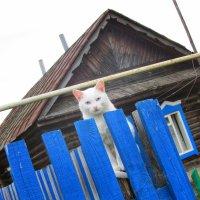 Кошка на заборе :: Юлия Александрова