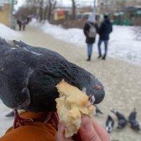 Птичий обед :: Artem