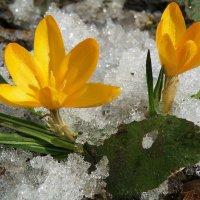 Весна идёт!!! :: Сергей