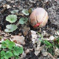 Весна пробуждает новые жизни... :: Тамара Бедай
