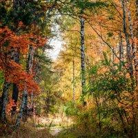 Золотая осень :: Ярослав Sm