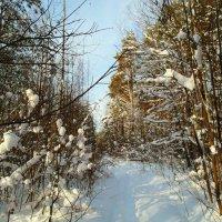 снежно :: Владимир