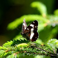 Бабочка :: Ольга Митрофанова