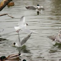 Птичьи разборки :: Нина Бутко