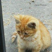 Грустное детство уличного котёнка :: Daria Vorons