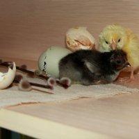 Натюрморт с цыплятами... :: Нэля Лысенко