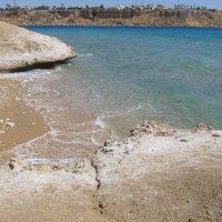 Красное море, Египет :: Елена Шаламова