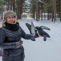 голуби :: Елена Кордумова