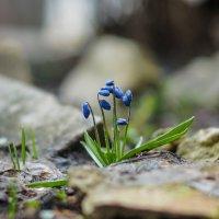 Весна №19 :: АЛЕКСЕЙ ФОТО МАСТЕРСКАЯ