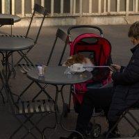 Выгул своего друга или утренний кофе в Италии :: Дмитрий Рожков