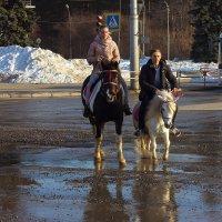 Четырёхкопытный транспорт :: Дмитрий Костоусов