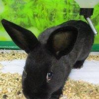 Кролик-малыш. :: Зинаида