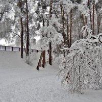 зимний лес :: Валентина. .