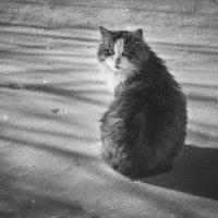 Кот а может и кошка ) :: Роман никандров