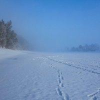 Туманное утро :: Алексей Сметкин