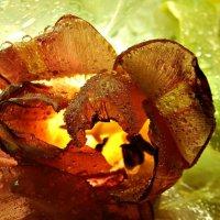 Тюльпан в контровом свете. :: ЛЮБОВЬ ВИТТ