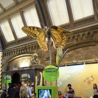 Бабочкины метаморфозы в Лондонском музее Естествознания :: Тамара Бедай