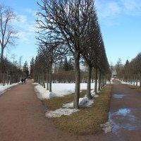 Екатерининский парк. Март :: Наталья Герасимова