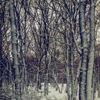 И снова снег... :: Виктор Малород