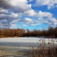 Небо весеннее синее-синее...тучи, как пух, как перо лебединое. :: Ольга Русанова (olg-rusanowa2010)