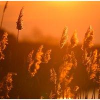 Заката яркое творение :: Антон Сологубов