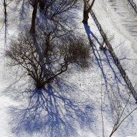 Синие тени марта... :: Юрий Куликов