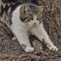 Хороша жизнь на дереве :: Ольга Винницкая (Olenka)