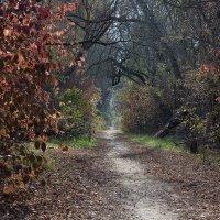 Осеннею тропой :: Борис Лебедев