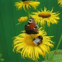 бабочка и шмель :: Maikl Smit