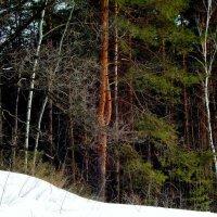 А в лесу уже темно :: Raduzka (Надежда Веркина)