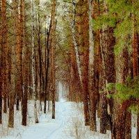 В лес по лыжне :: Raduzka (Надежда Веркина)
