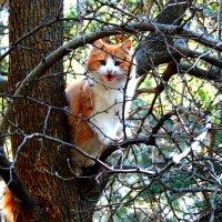На дереве :: Артур Хороший